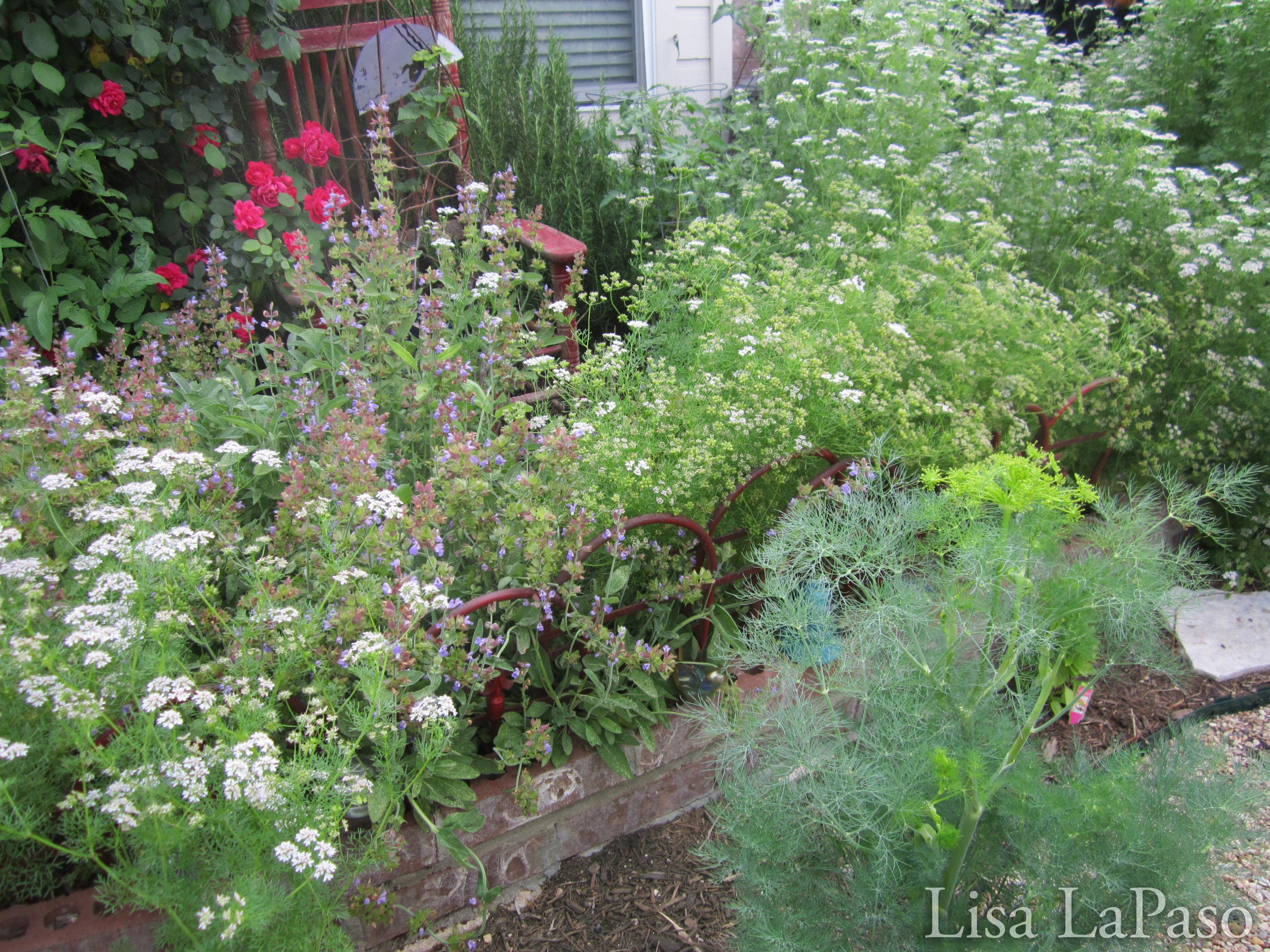 Square Foot Gardening Companion Planting Lisas