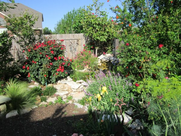 Grass isn't everything...Texture, color, low water..Xeriscape!