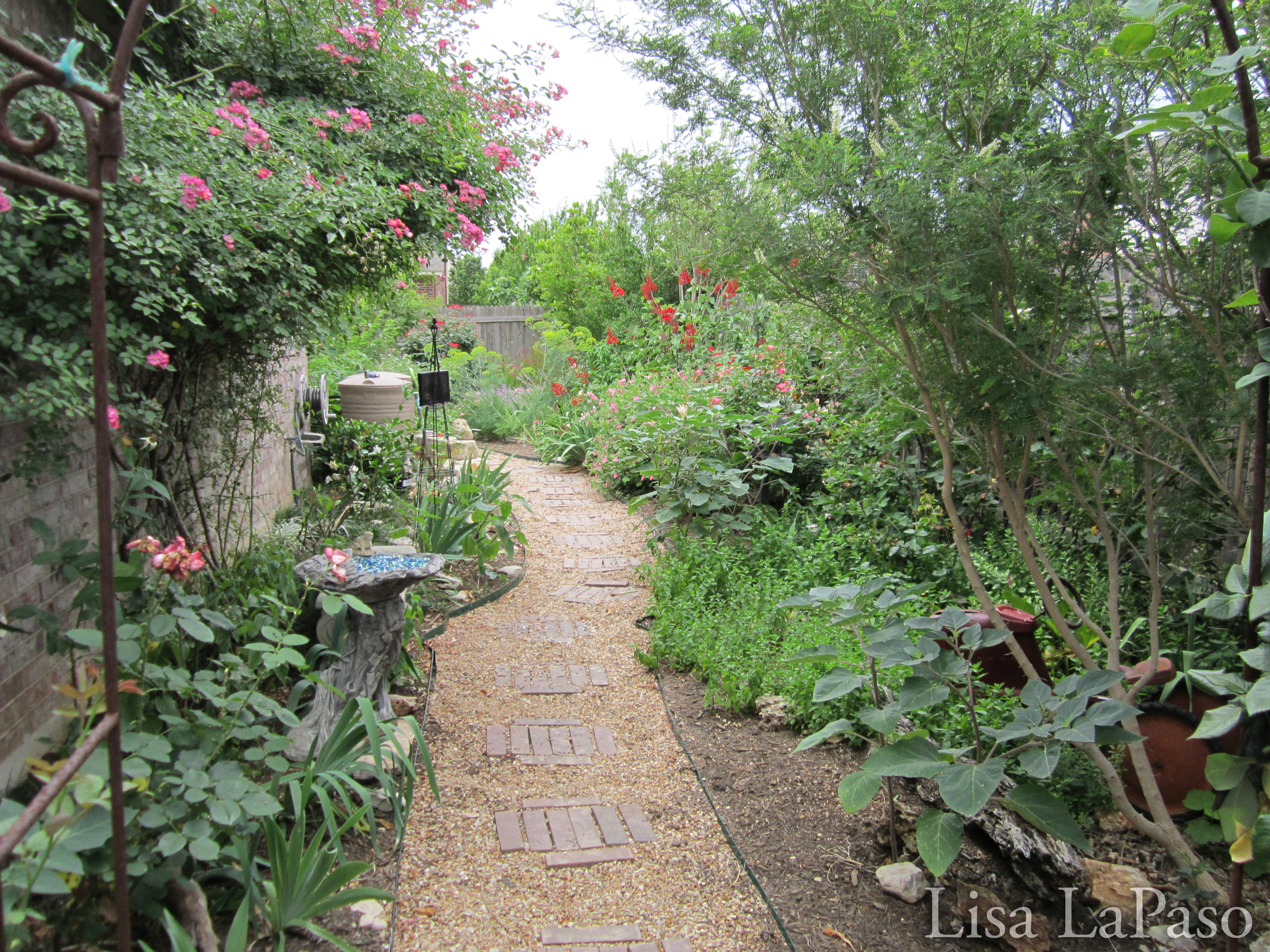 Landscape and Xeriscape Design, Austin Texas | Lisa's Landscape ...