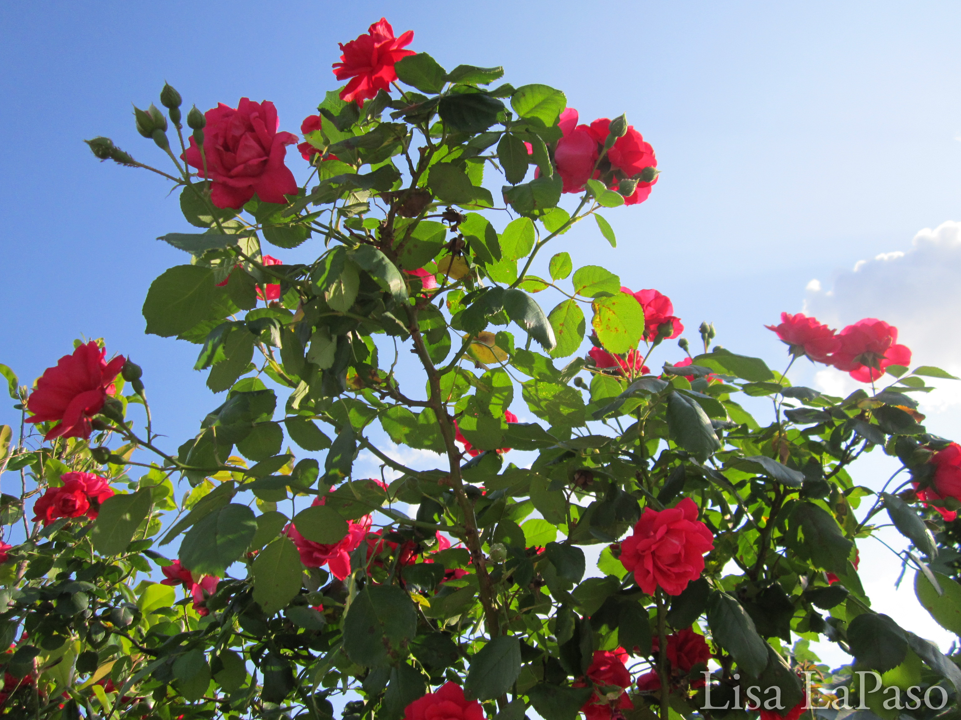 Super Drought Tolerant Plants For Central Texas Lisa S