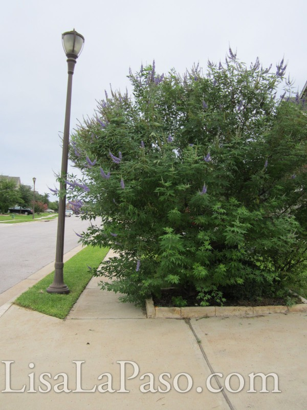 An over grown bush can be more than just an eyesore.