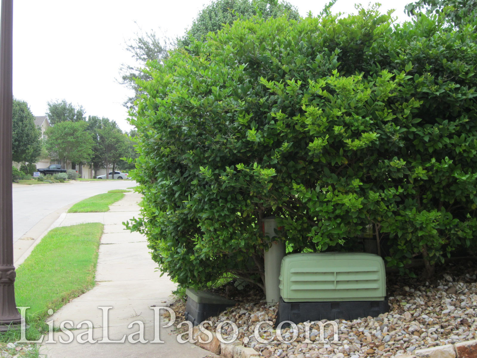 Landscape bushes and shrubs - Types Of Shrubs For Landscaping Is Your Landscape Playing Well