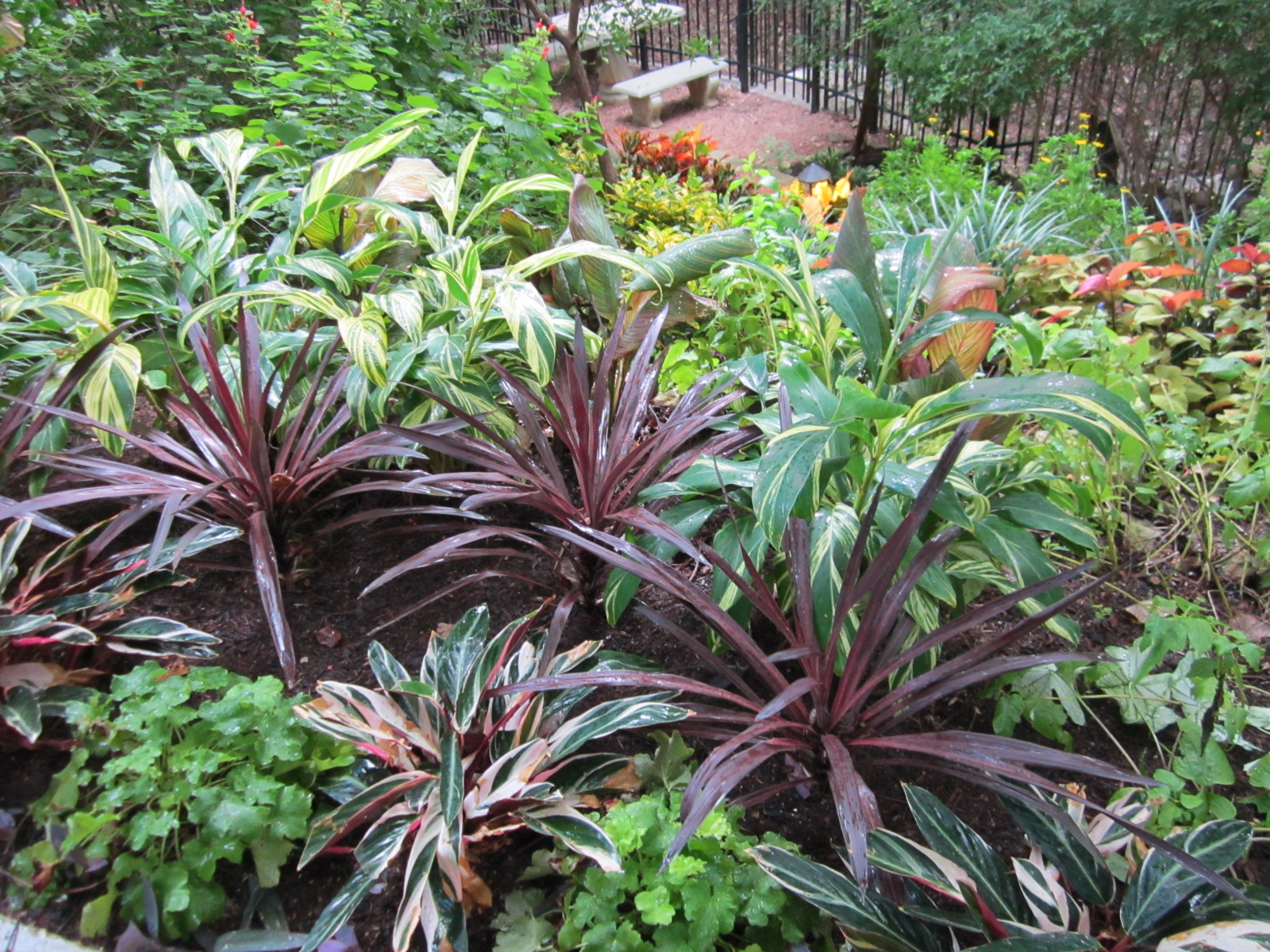 Shade Plants For Central Texas Lisas Landscape Design