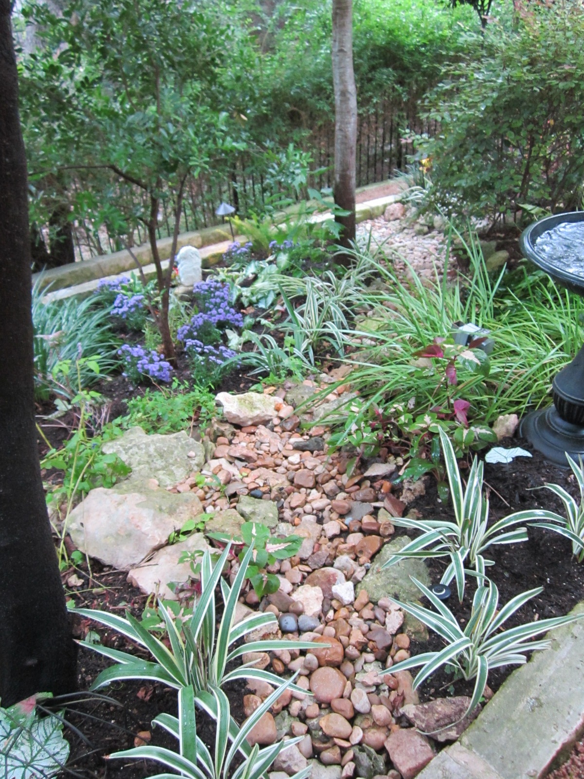 Shade plants for central texas lisa 39 s landscape design for Landscaping rocks and plants