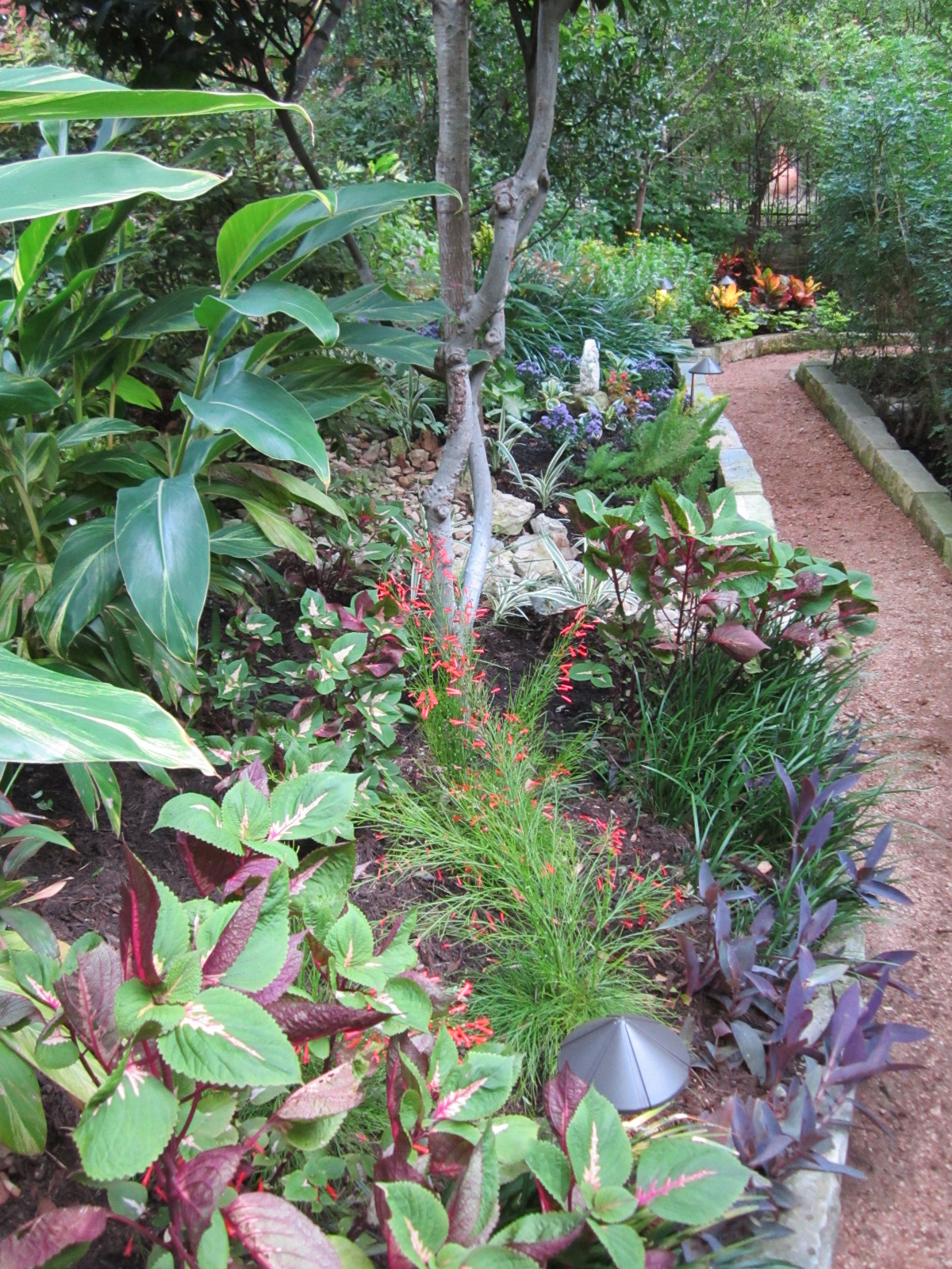 Shade plants for central texas lisa 39 s landscape design for Low maintenance shade garden