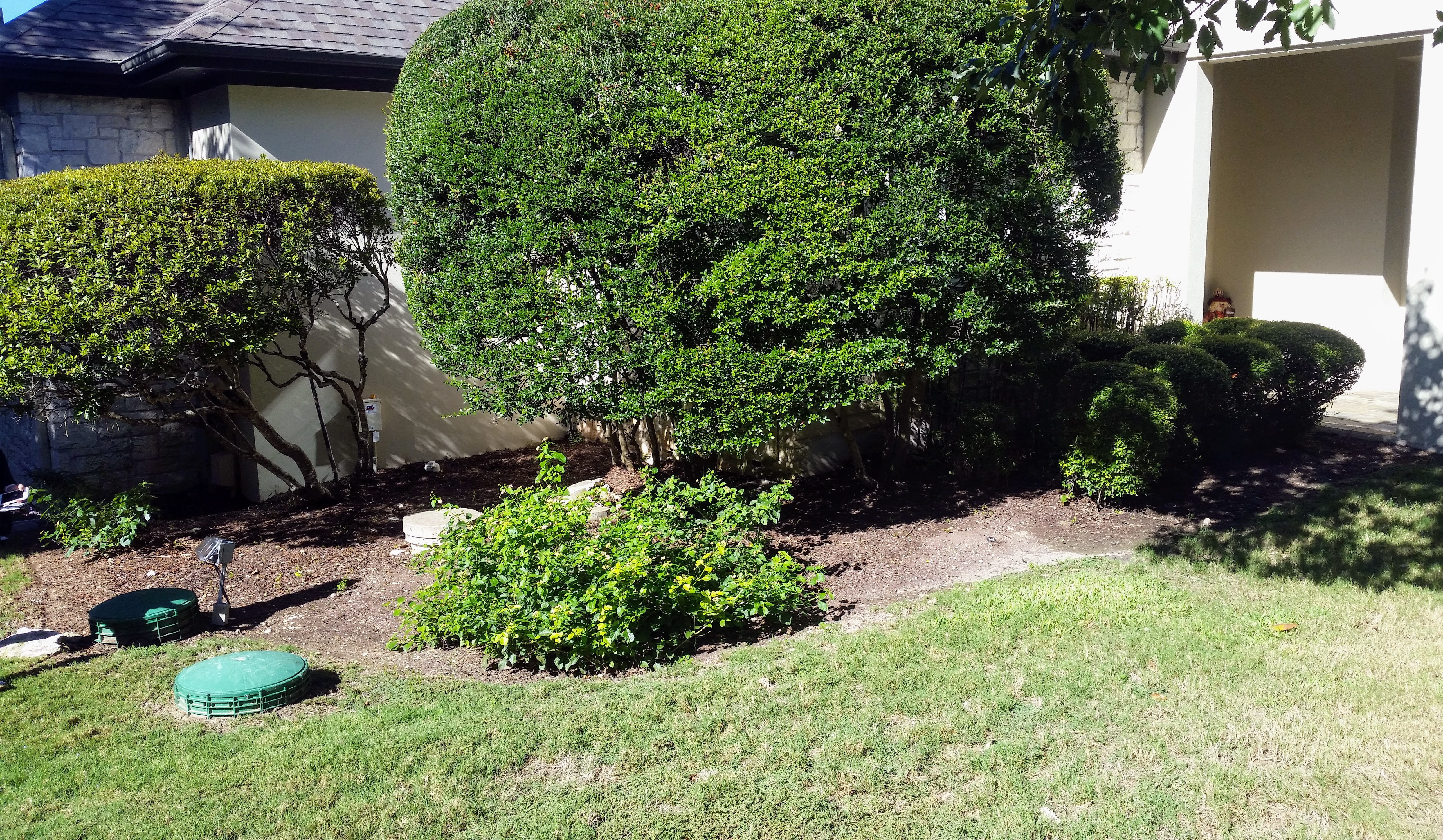 how to fix overgrown bushes
